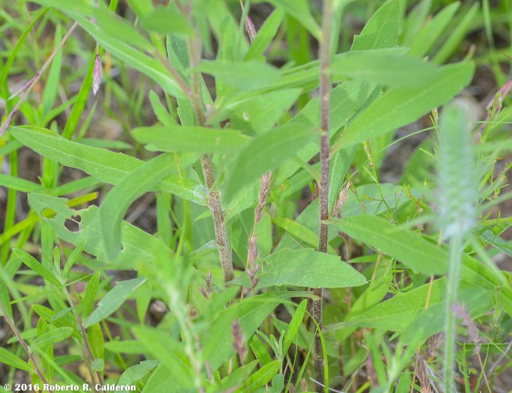 Stems and leaves