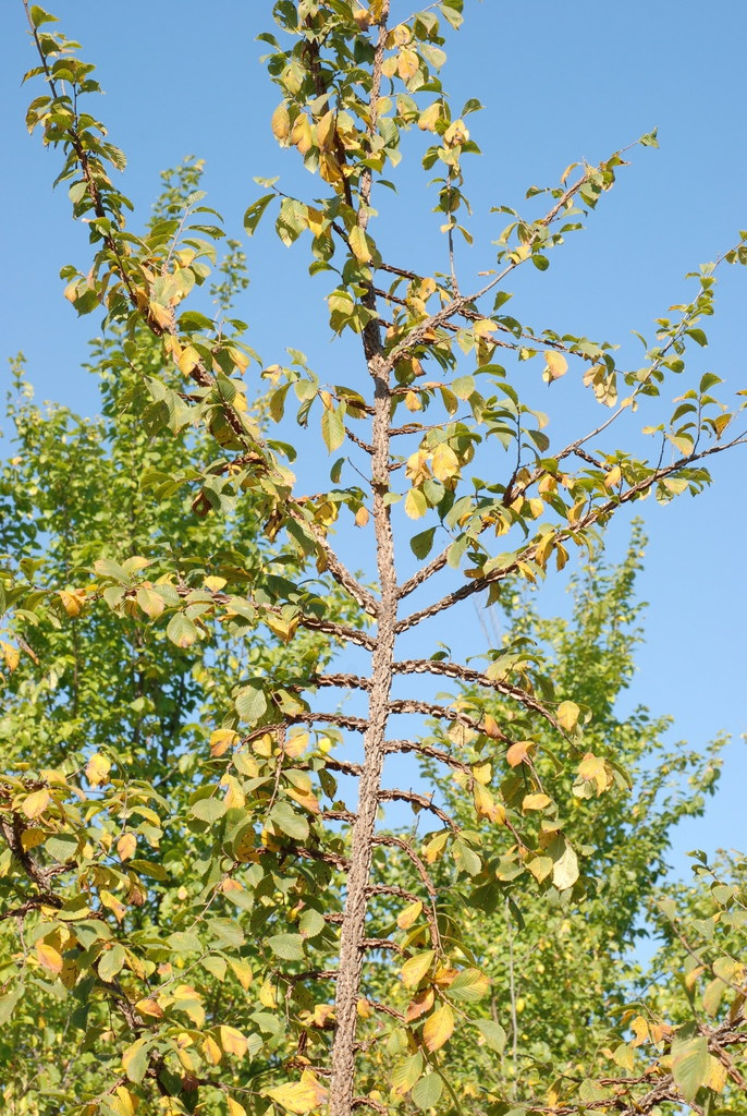 Branch (Brighton, NY)-Mid Fall