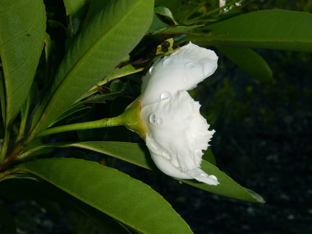 Side view of flower