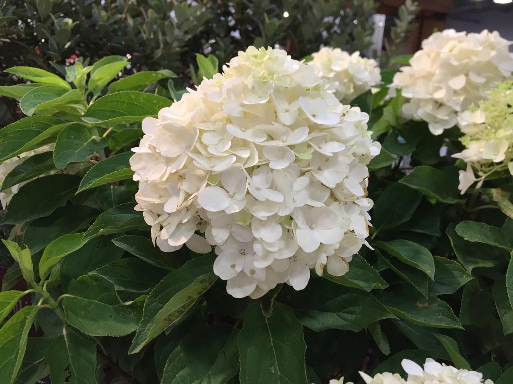 'White Wedding' Flowers