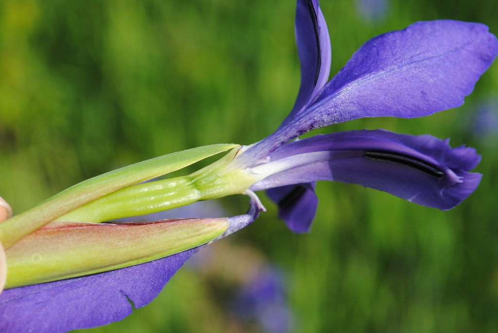 Side of flower
