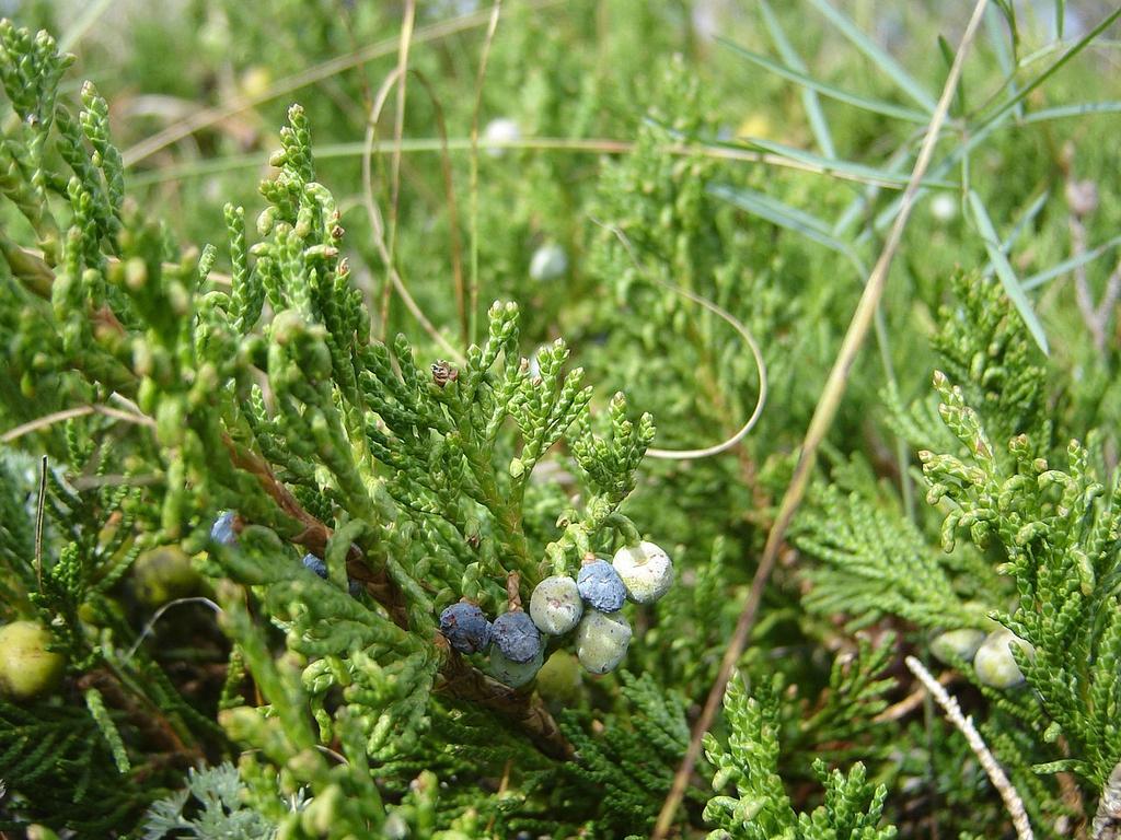 Blue cones