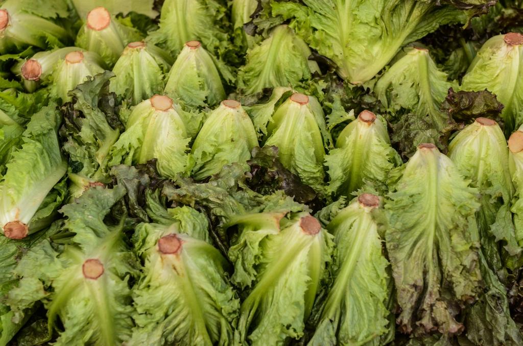 bottom of lettuce