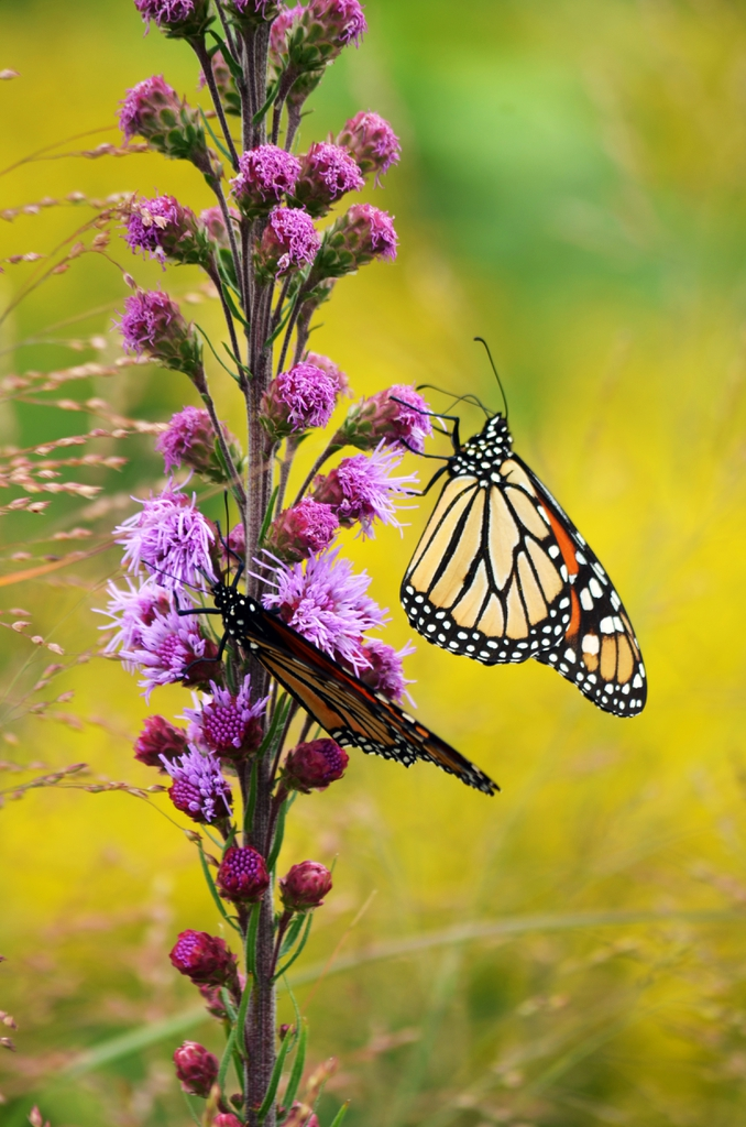 Flower with Monarch butterfly