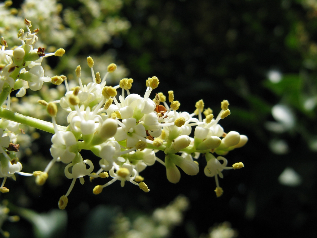 Close up of flower