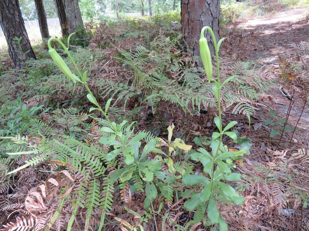 Form in native habitat