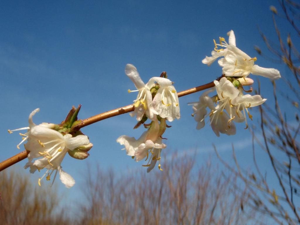 Flower Bottom view