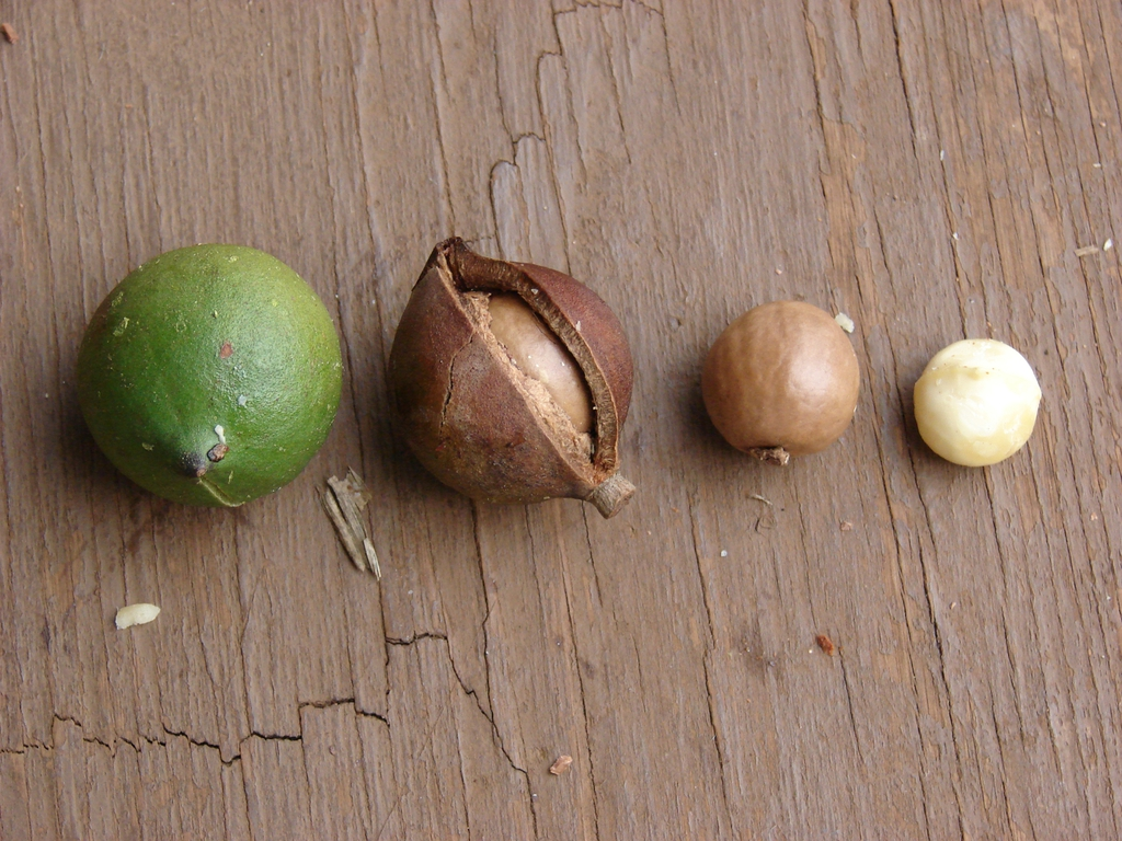 Stages of the fruit