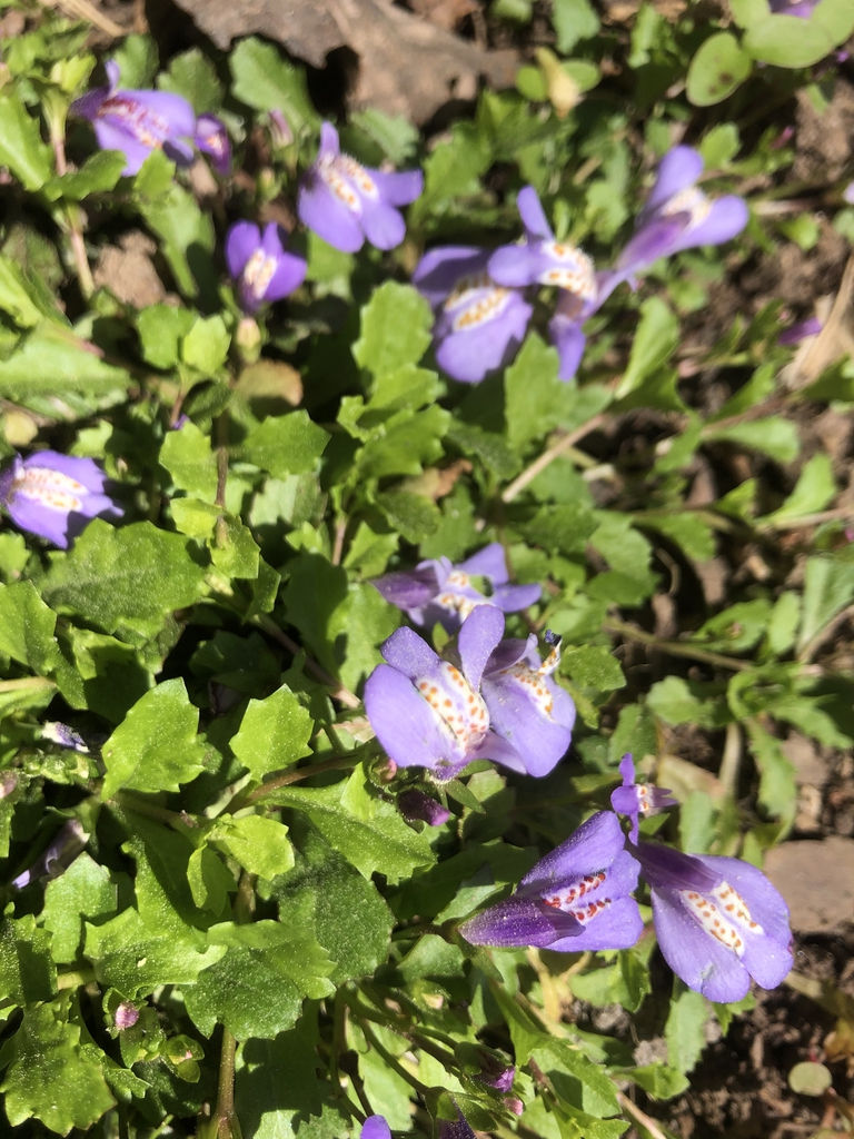 Closeup of flower & leaves April Wake County NC