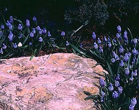 Grouping of plants around a rock