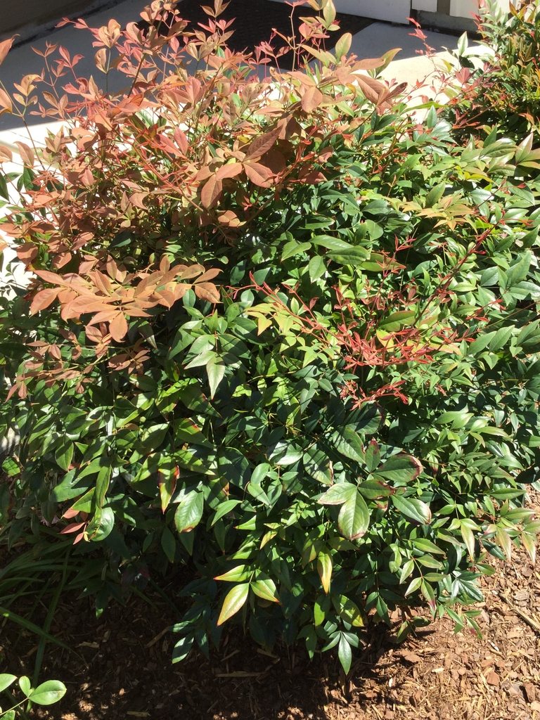 form, spring, Durham County, NC