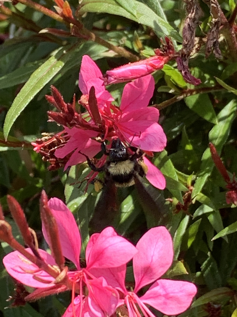 Flowers with bumble bee