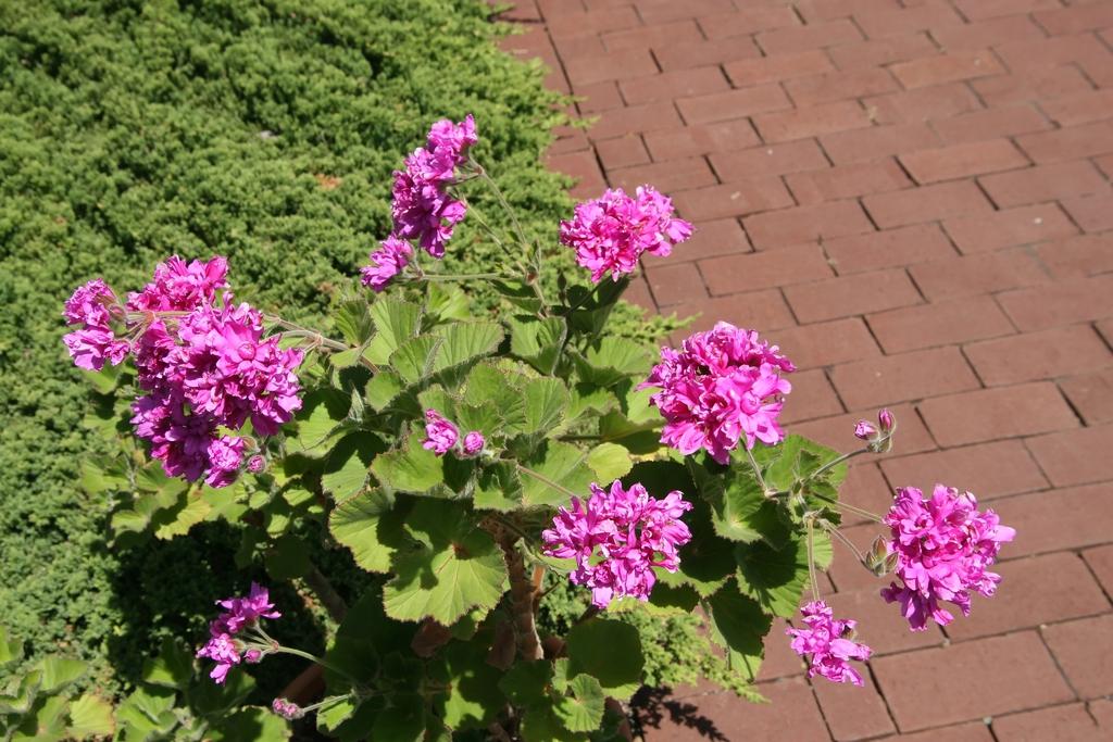 Form/Flower
