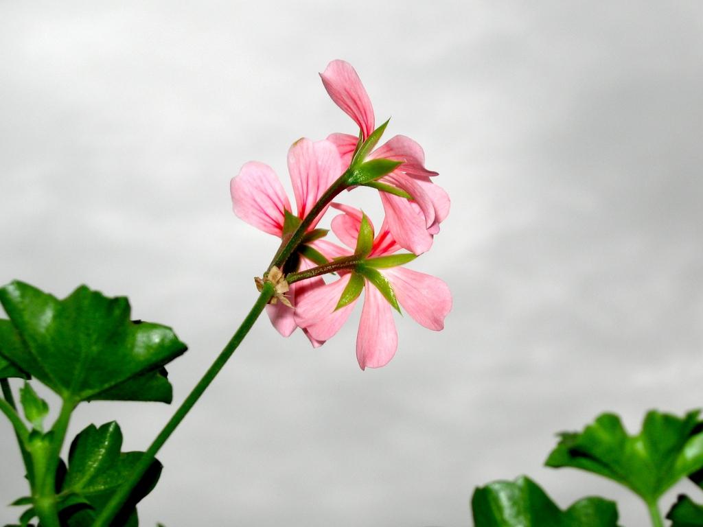 Stem and Flower