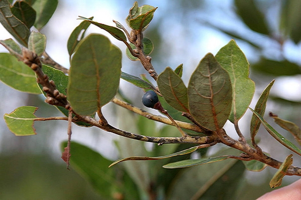 Stem and Leaves