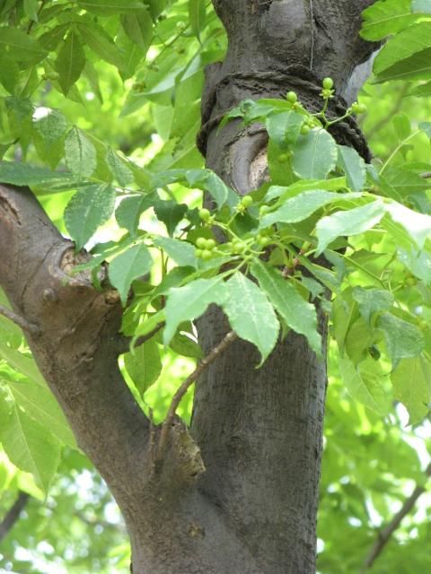 Leaves an bark