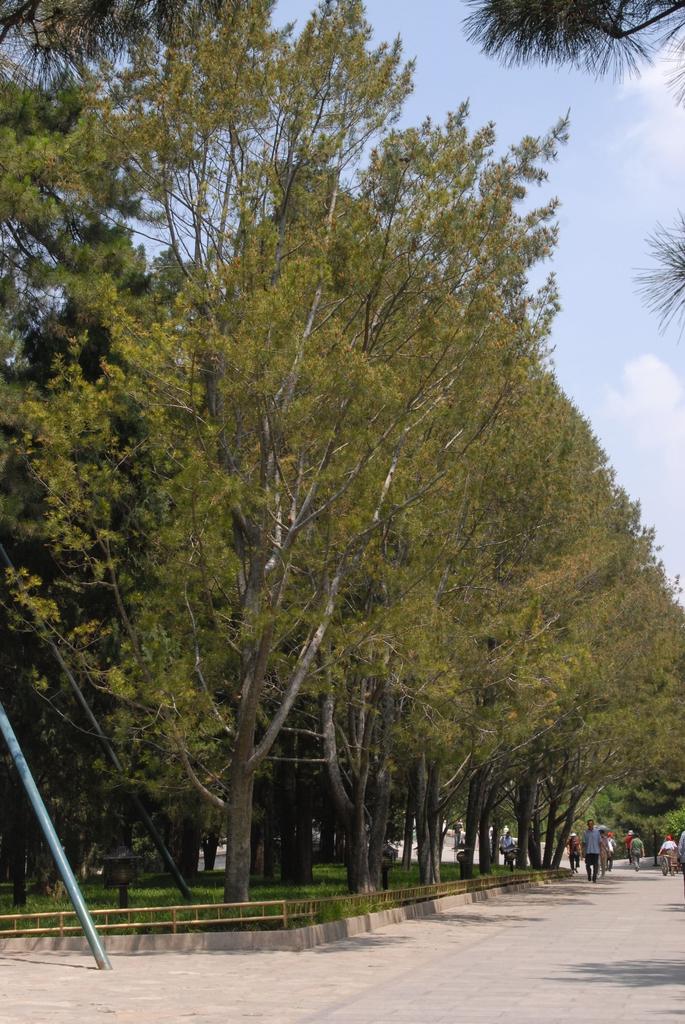 Tree Line