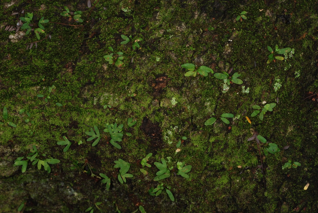 Native habitat (Ojus, FL)-Mid Winter