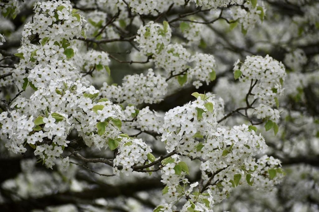 Flowers - March 25 - Warren Co., NC