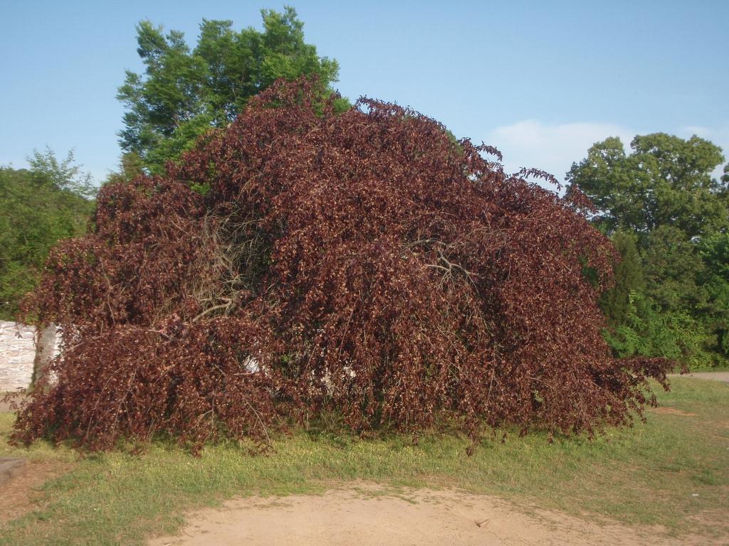 'Crimson Cascade' Form