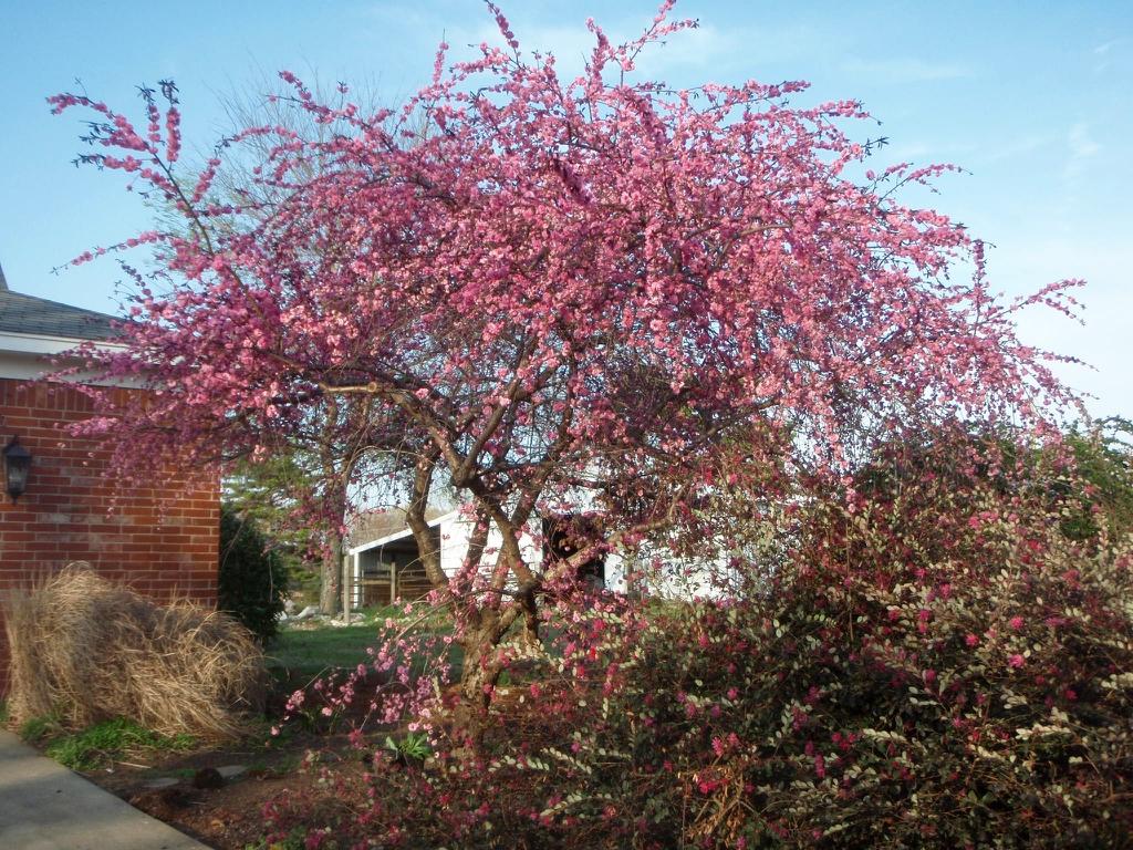 'Pink Cascade' Form
