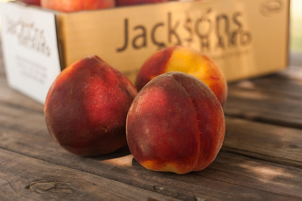 Prunus persica 'Redhaven'
