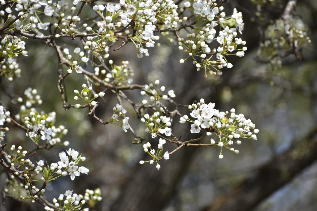 Spring Flowers - Warren Co., NC
