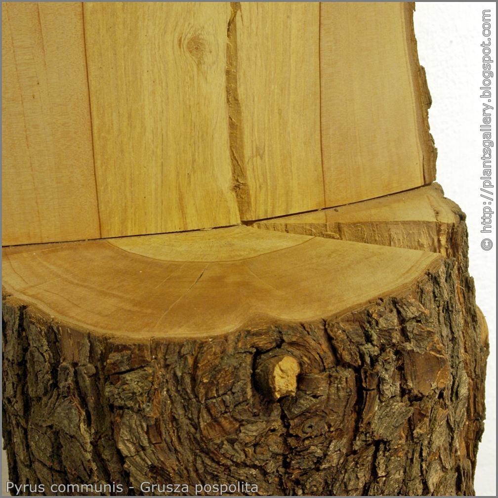 Bark & Wood