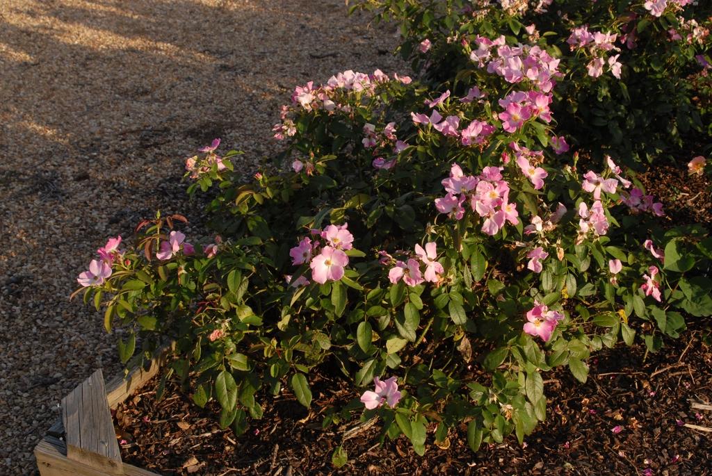 Flower Form