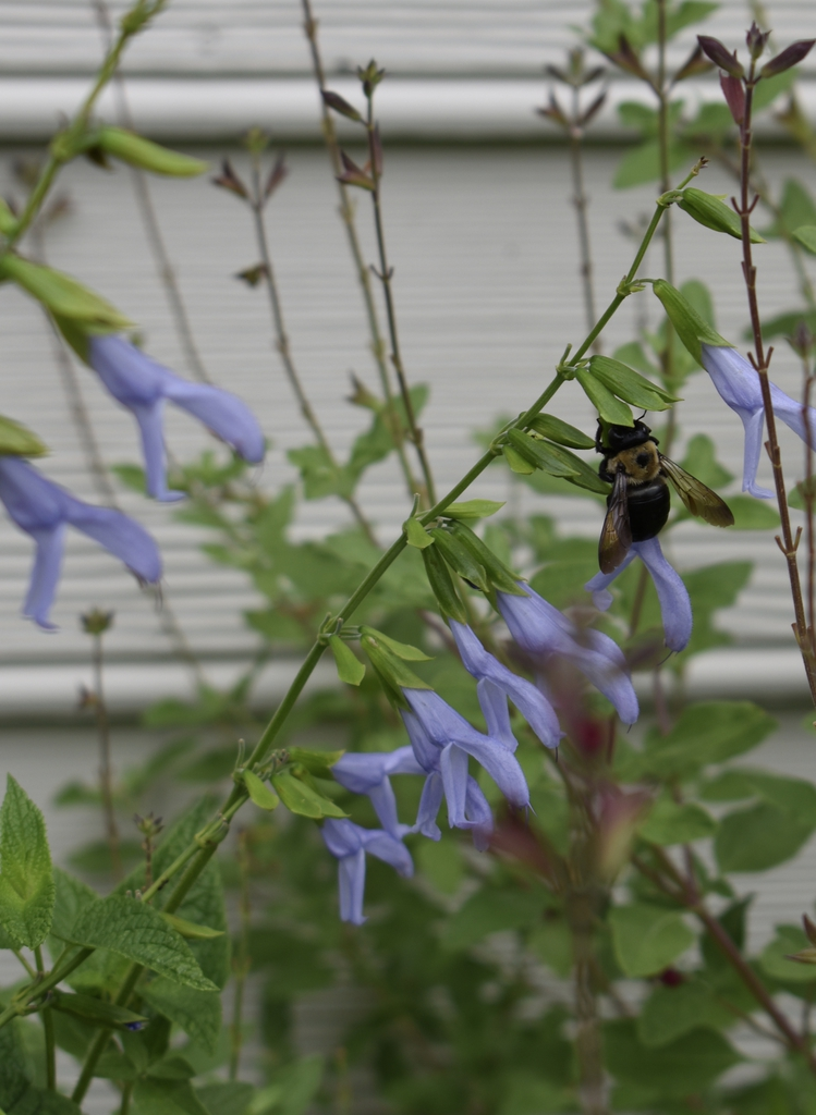 flower and bee, Wake County, NC