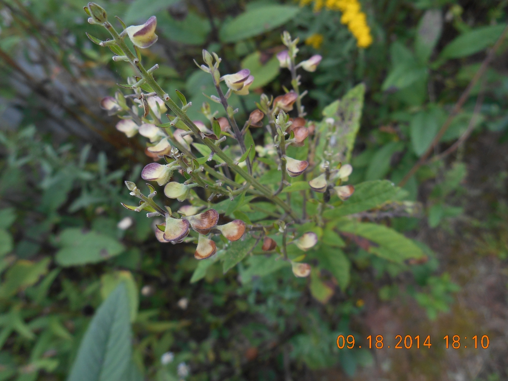 seed pods, McDowell County, NC