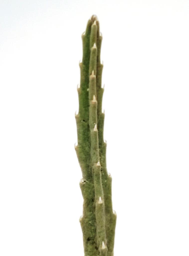Grooved stem