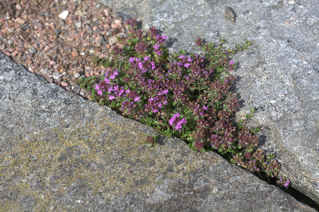 Growing in cracks