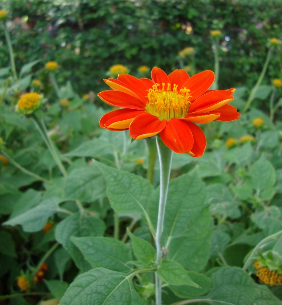 Flower and stem