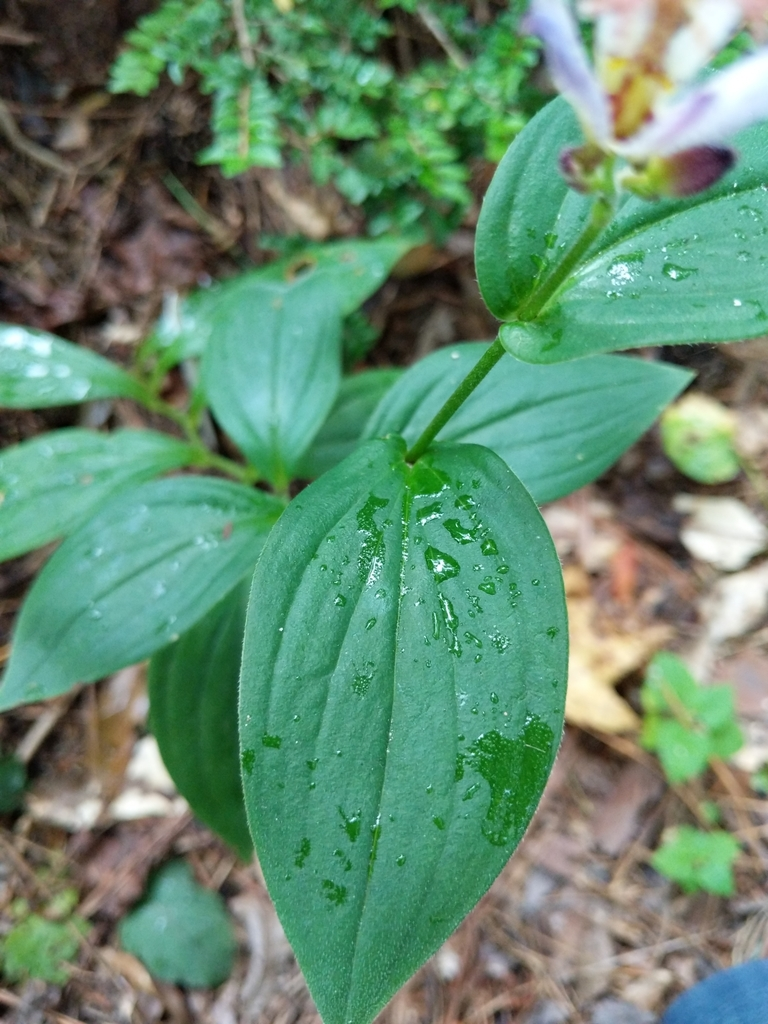 Clasping leaves