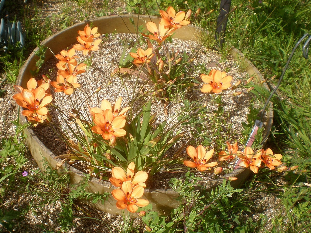 Grown in a pot