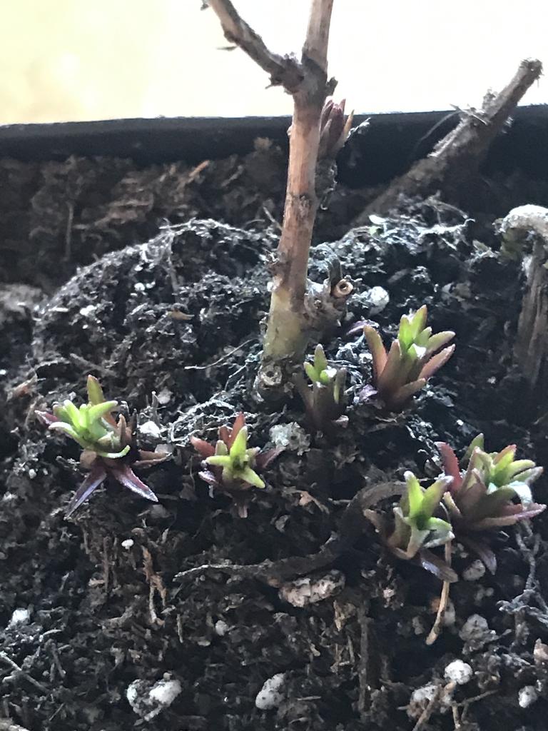 Emerging plants