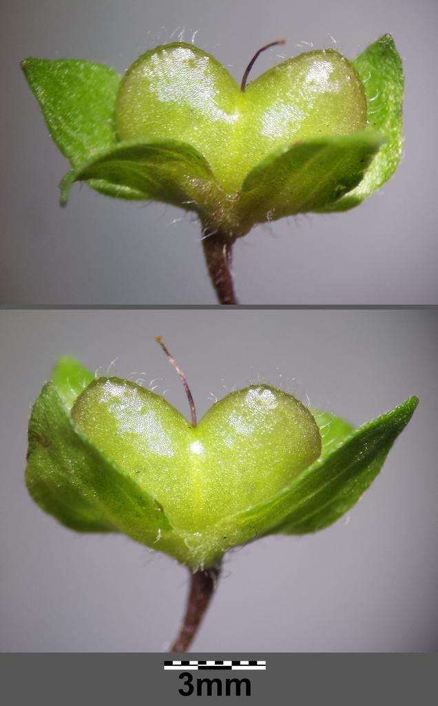 Unripe Fruit