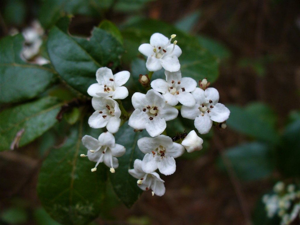 Flowers (early spring blossom in Moore County)