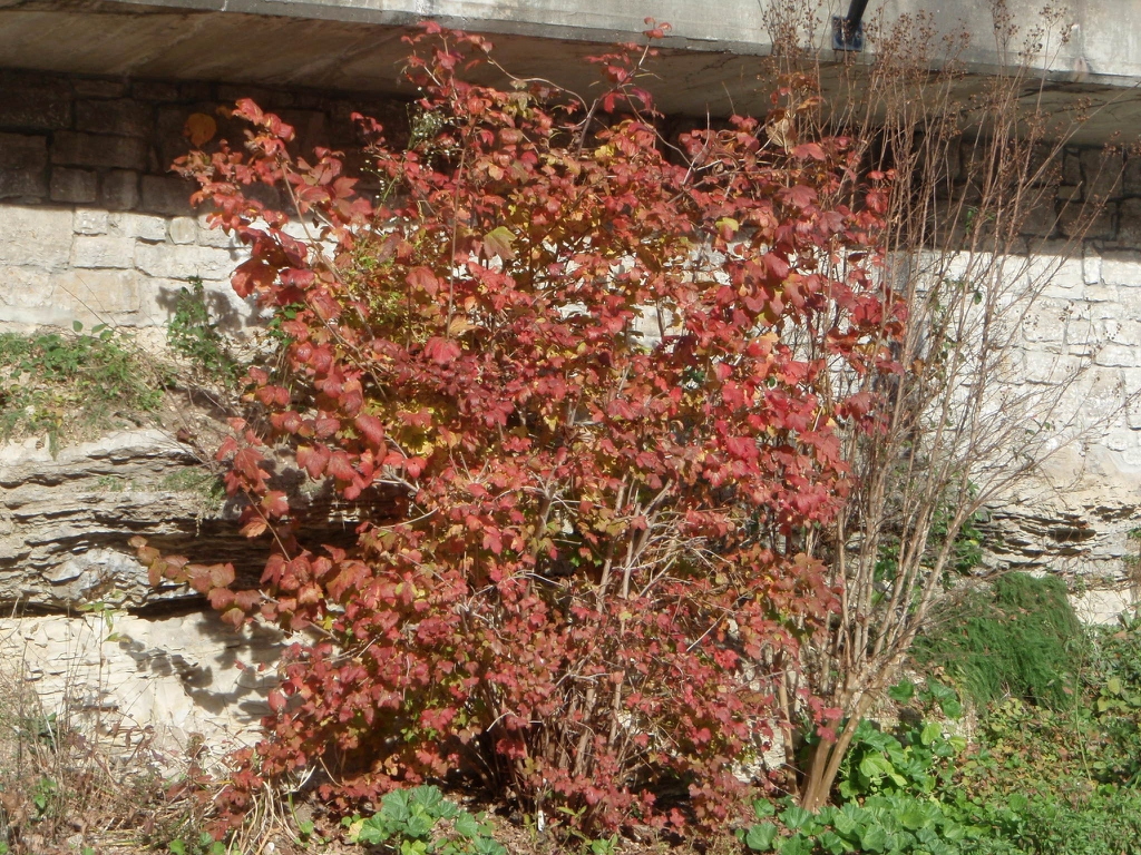 Fall Color Form