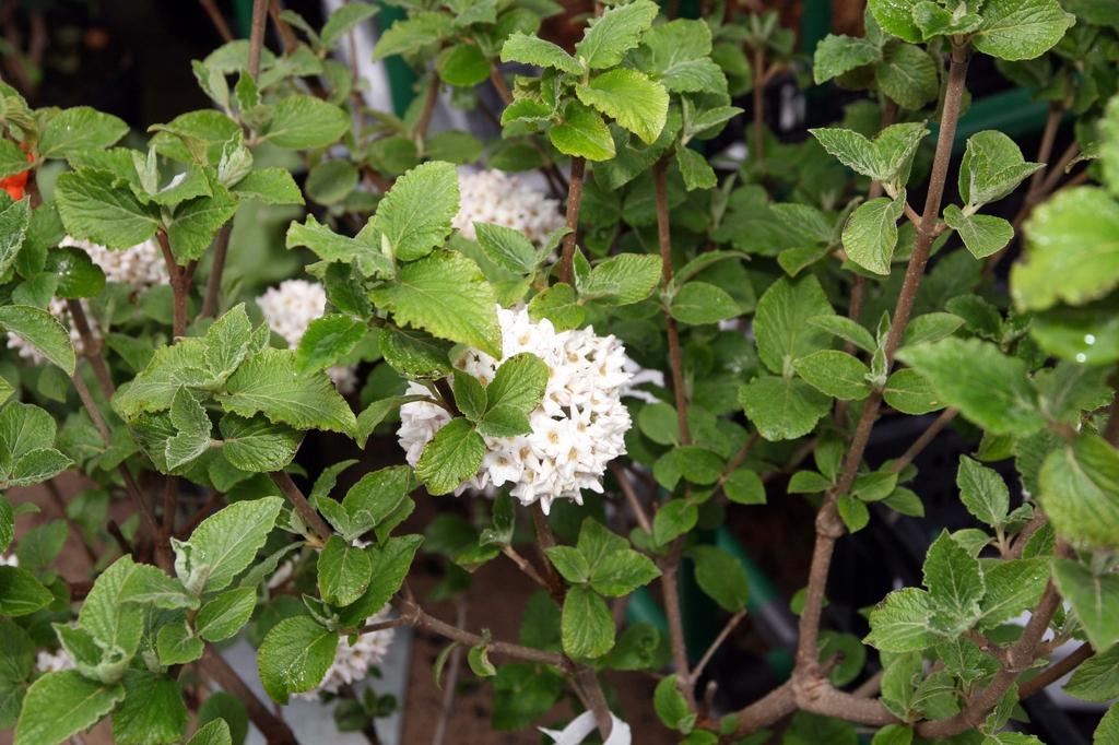 Flowers, leaves, stems