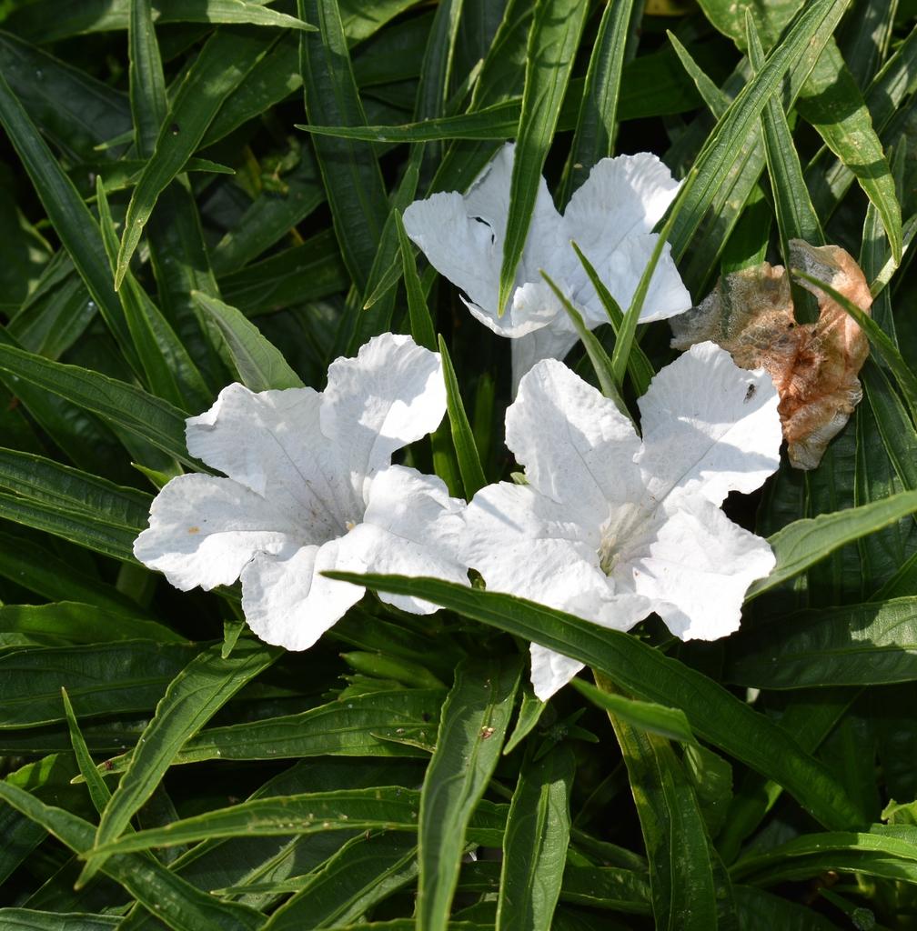 Flowers - Aug. 12 - Wake Co., NC