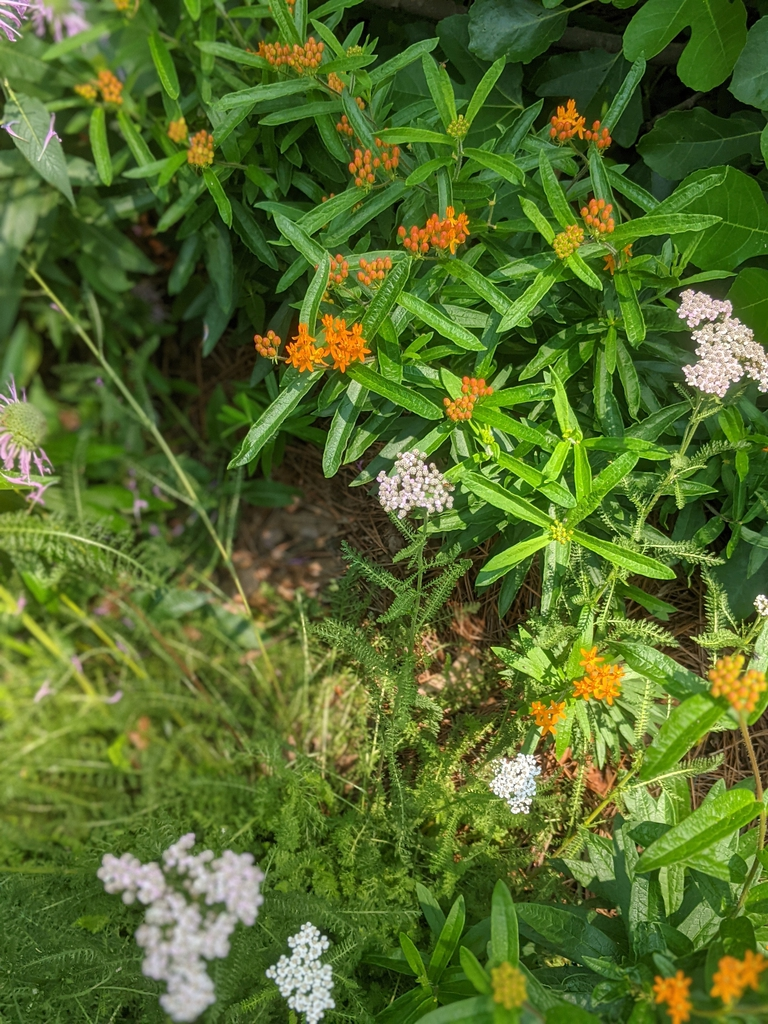 Flowers, Leaves, and Buds in Mixed Planting