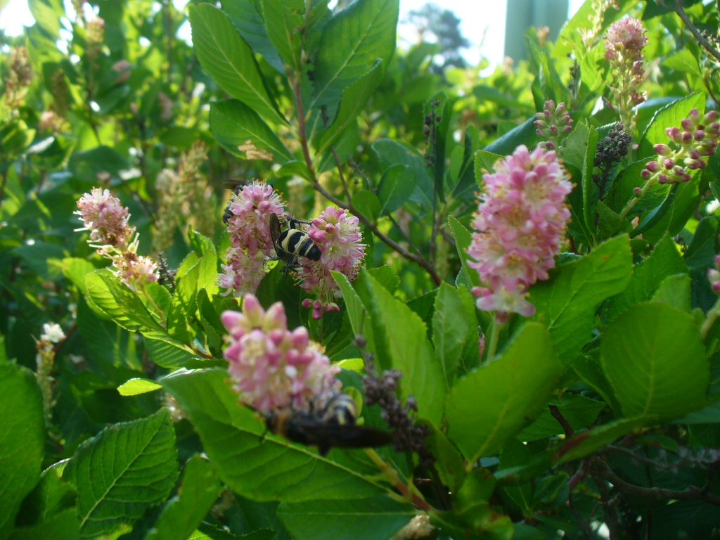 flowers, leaves, and pollinators (summer in Moore county)
