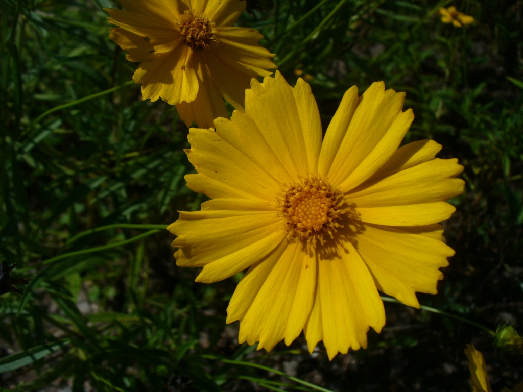 close up of flower (in summer in Moore county)