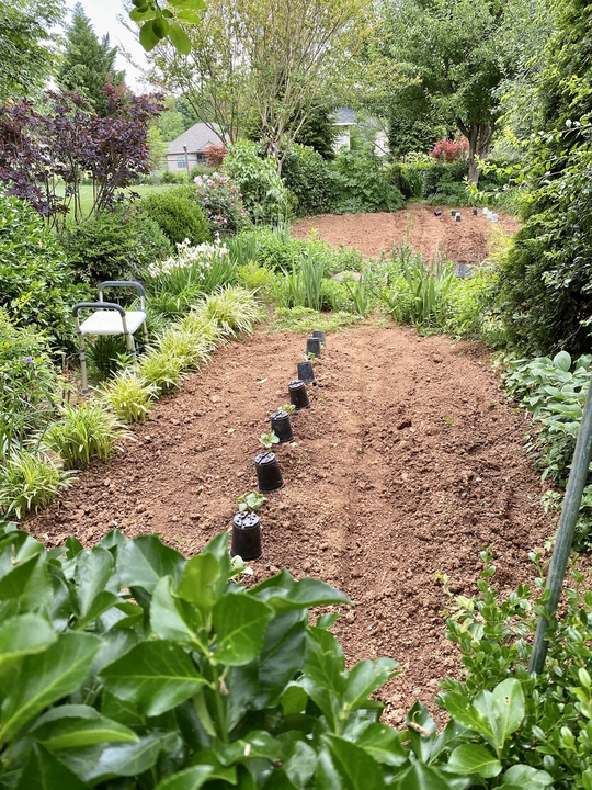 Bordered vegetable patch