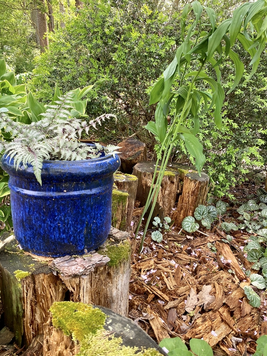 Bright blue container to break up the space.
