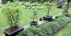Bonsai trees on wall