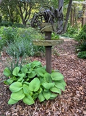 Hostas create a foundation for an dramatic garden sculpture.