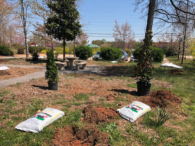 Conifer trees in pots and bags of soil next to pre-dug holes